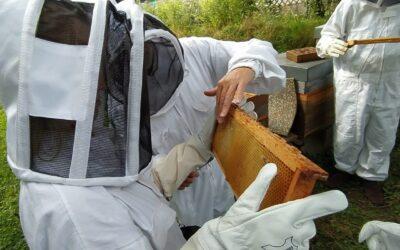 Autour de nos ruches